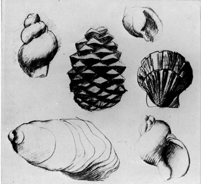 Корбюзье -эскизы для гравюр, наброски елей и раковин 1901-03-2
